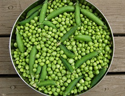 canning peas 5
